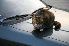 Cat on warm bonnet Stock Images