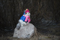 Cat in warm clothes waiting for spring Royalty Free Stock Photo