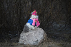 Cat in warm clothes waiting for spring Royalty Free Stock Images
