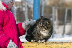 Cat was frightened of a little girl stretching out her hand to stroke her. The cat was frightened of a little girl stretching out her hand to stroke her Royalty Free Stock Image