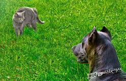 Cat was scared dog. Looking at him. Outdoors Royalty Free Stock Image