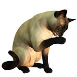 Cat  wash. 3d rendering of a siamese cat who cleans itself as illustration Royalty Free Stock Images