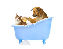 Cat-wash. Dog and cat in a bathtub royalty free stock photography