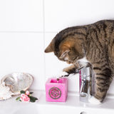 Cat on washbasin Royalty Free Stock Image