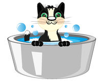 Cat is washed in basin Stock Photography