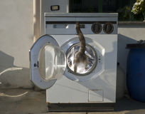 Cat in a washer Stock Images
