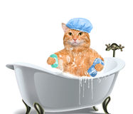 Cat washes. Isolated on white stock images