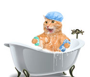 Cat washes. Stock Photo