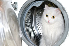 Cat in washing machine. Royalty Free Stock Photos