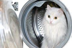 Cat in washing machine. Royalty Free Stock Photos