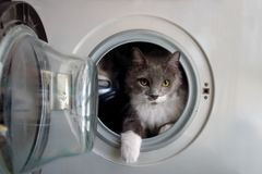 Cat in the washing machine. Awaiting its bath stock photos