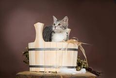 Cat In The Washtube Royalty Free Stock Photo