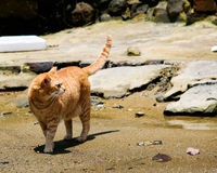 Cat on a wasted beach Stock Photo