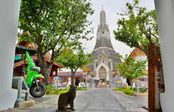Cat at Wat Arun. Bangkok. Thailand Stock Photos