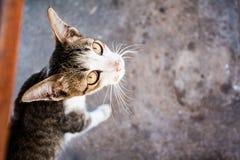 Cat Watch Photo stock