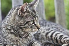 Cat Lying on Garden Bench Royalty Free Stock Photo