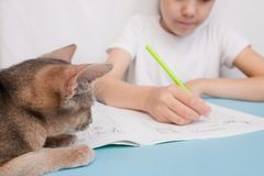 The cat watches as the girl makes the lessons, favorite pets. stock photo