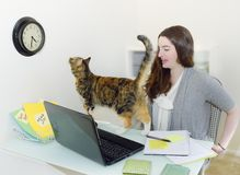 Cat Watches Office Clock. Women under time pressure gets interference from pet. Another good reason not to bring your cat to work or home office Royalty Free Stock Photo