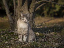 Cat with watchful eyes Royalty Free Stock Photos