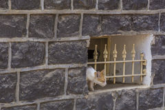 Cat watching  through bars in traditional basalt building Stock Photography