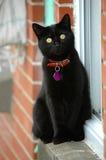 Cat watching bird. Close-up Stock Photo