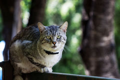Cat watching carefully Royalty Free Stock Image