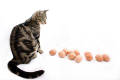 Cat watching eggs Royalty Free Stock Photo