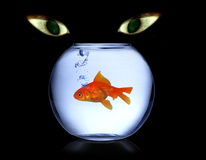 Cat watching fish. Collage with cats eyes in background watching fish in aquarium Royalty Free Stock Photo