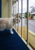 Cat Watching Flood Royaltyfri Fotografi