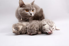 Cat watching her babies Stock Image
