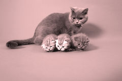 Cat watching her small baby Royalty Free Stock Images