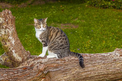 Cat watching and hunting Stock Images