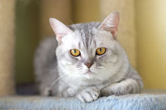 Cat watching from its cote. The cute cat . shoot it in the pets shop Royalty Free Stock Photos