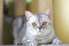 Cat watching from its cote. The cute cat . shoot it in the pets shop Royalty Free Stock Images