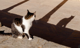 Cat watching its shadow. On late afternoon light Stock Photo