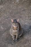 Cat Watching mignonne l'appareil-photo Images libres de droits