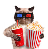 Cat watching a movie Stock Image