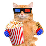Cat watching a movie. Stock Images
