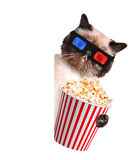 Cat watching a movie Royalty Free Stock Photos