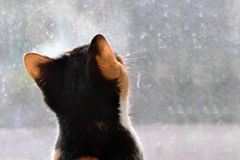 Cat watching out of the window Royalty Free Stock Images