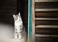 Cat watching outside ! Royalty Free Stock Image