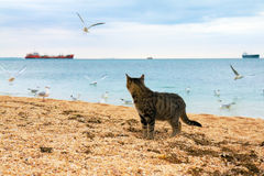 Cat on the beach. Cat watching seagulls on the beach stock photos