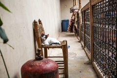 Cat watching. A small cat watching from the chair Royalty Free Stock Photography