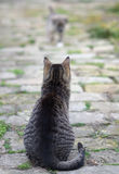 Cat watching the small puppy approaching Royalty Free Stock Photo
