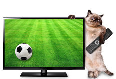 Cat watching smart tv translation of football game. Royalty Free Stock Photos