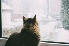 Cat watching snow Stock Photo