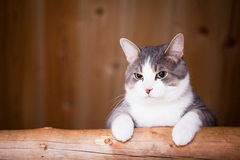 Cat watching Stock Image