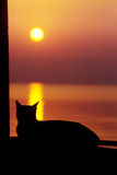 Cat watching sun go down. Silhuette Royalty Free Stock Photos