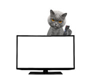 Cat watching television Royalty Free Stock Photography