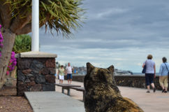 Cat watching tourists Royalty Free Stock Photography